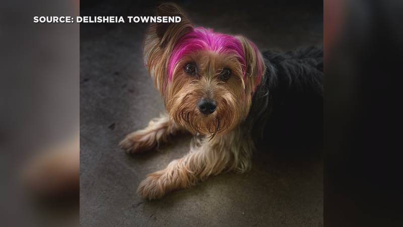 Princess the Yorkie went missing during a visit to Dog Spot.