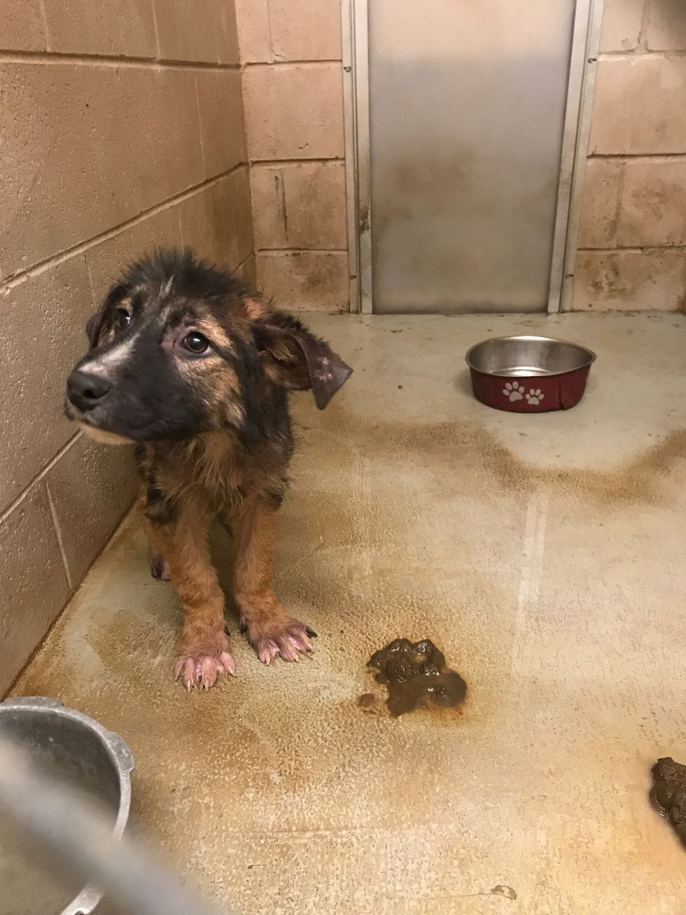 This puppy sits in an unclean kennel at the Jackson Animal Control shelter.