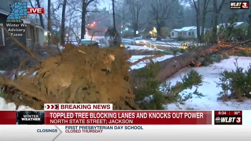 Huge tree topples power line, slows traffic on N. State Street