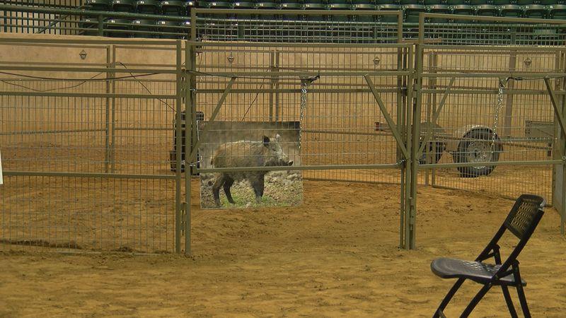 Mississippi Wild Hog Control Program