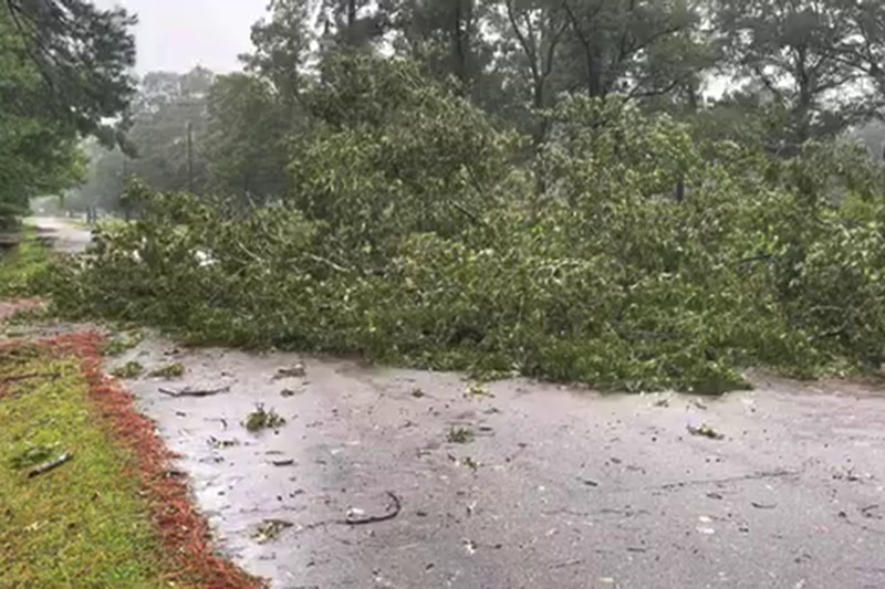 A tree blocking traffic on Gay St. in McComb