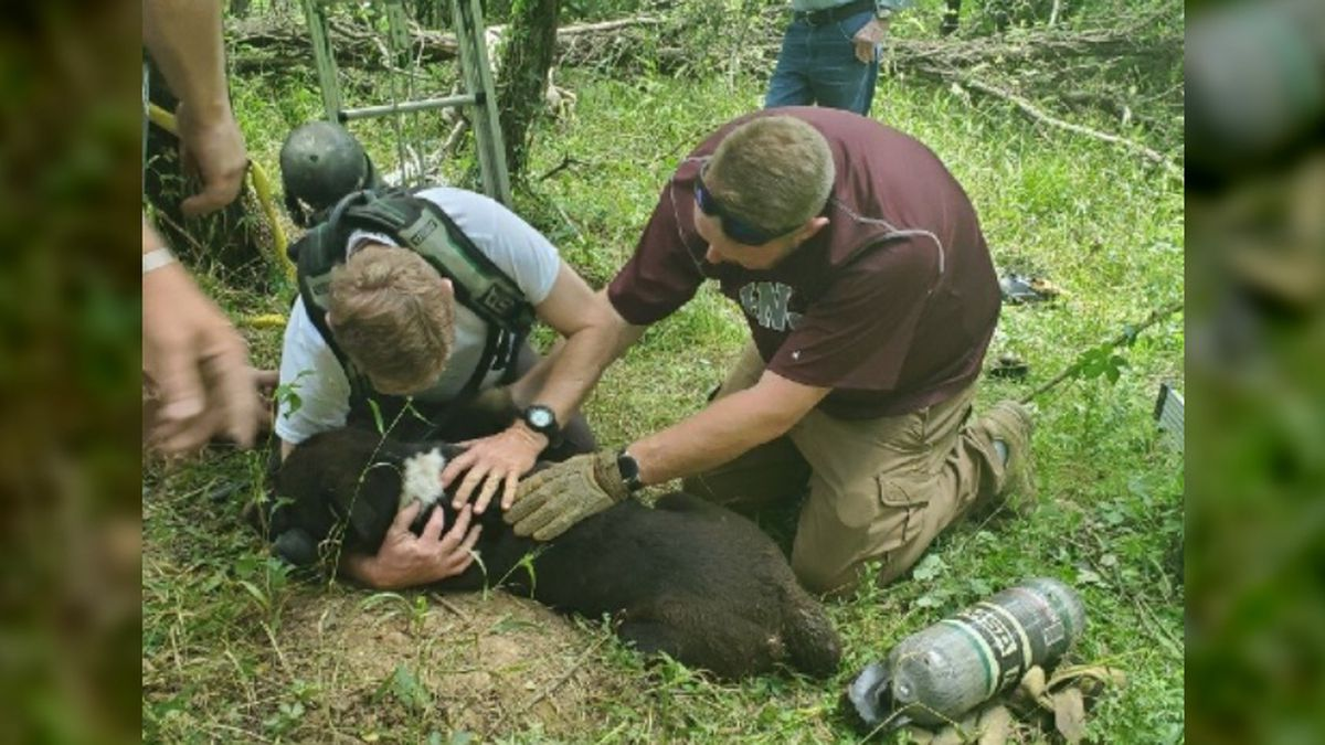 Dog rescued after falling into cistern in Vicksburg woods