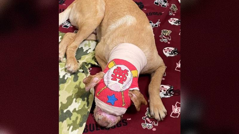 #BuddyStrong: Dog could be released by end of July after being set on fire in April