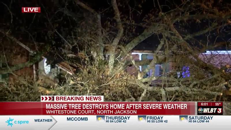 Huge tree topples over slicing N. Jackson home in half