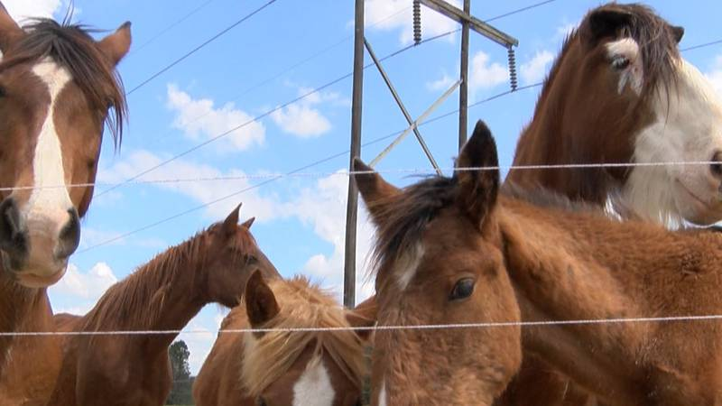 The Oakley Family was rescued and reunited by Rocking R Ranch & Rescue.